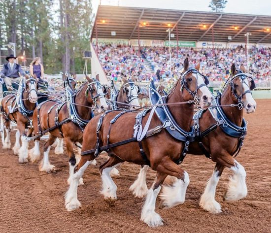 Draft Horse Classic Archives - Nevada County Fairgrounds